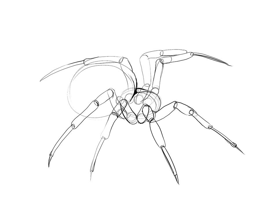 Lesson 4 Drawing Insects And Arachnids