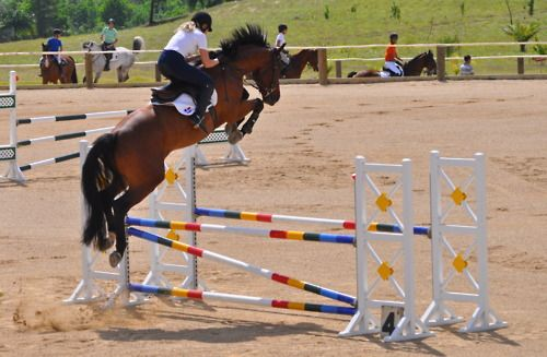 holy jump! this horse makes this fence look like its a cross rail..