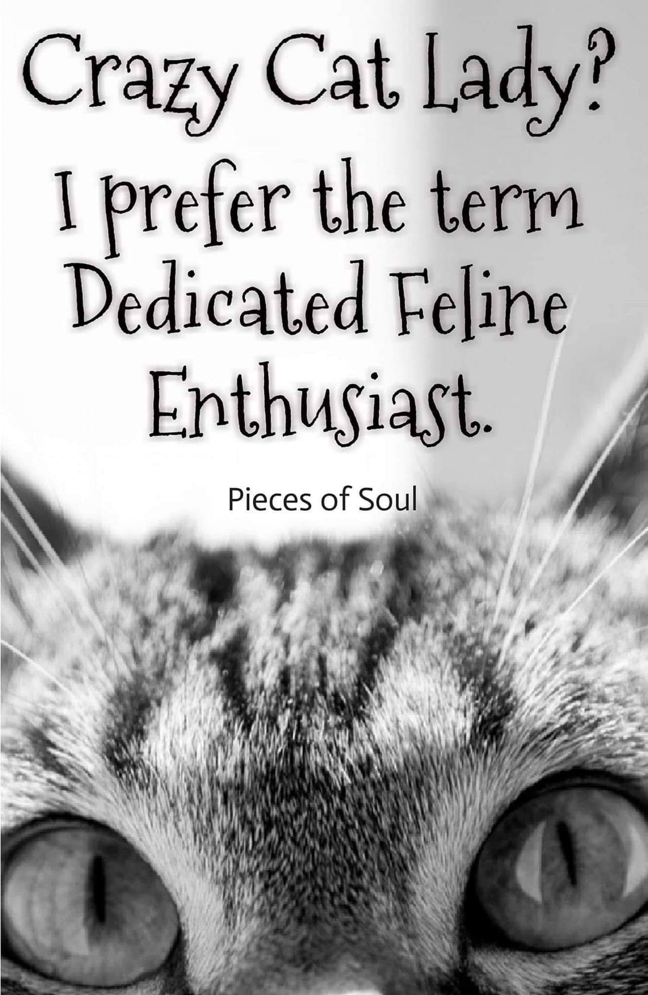 Pin By Stephanie Medina On Animal Love In 2020 Crazy Cats Silly Cats Crazy Cat Lady