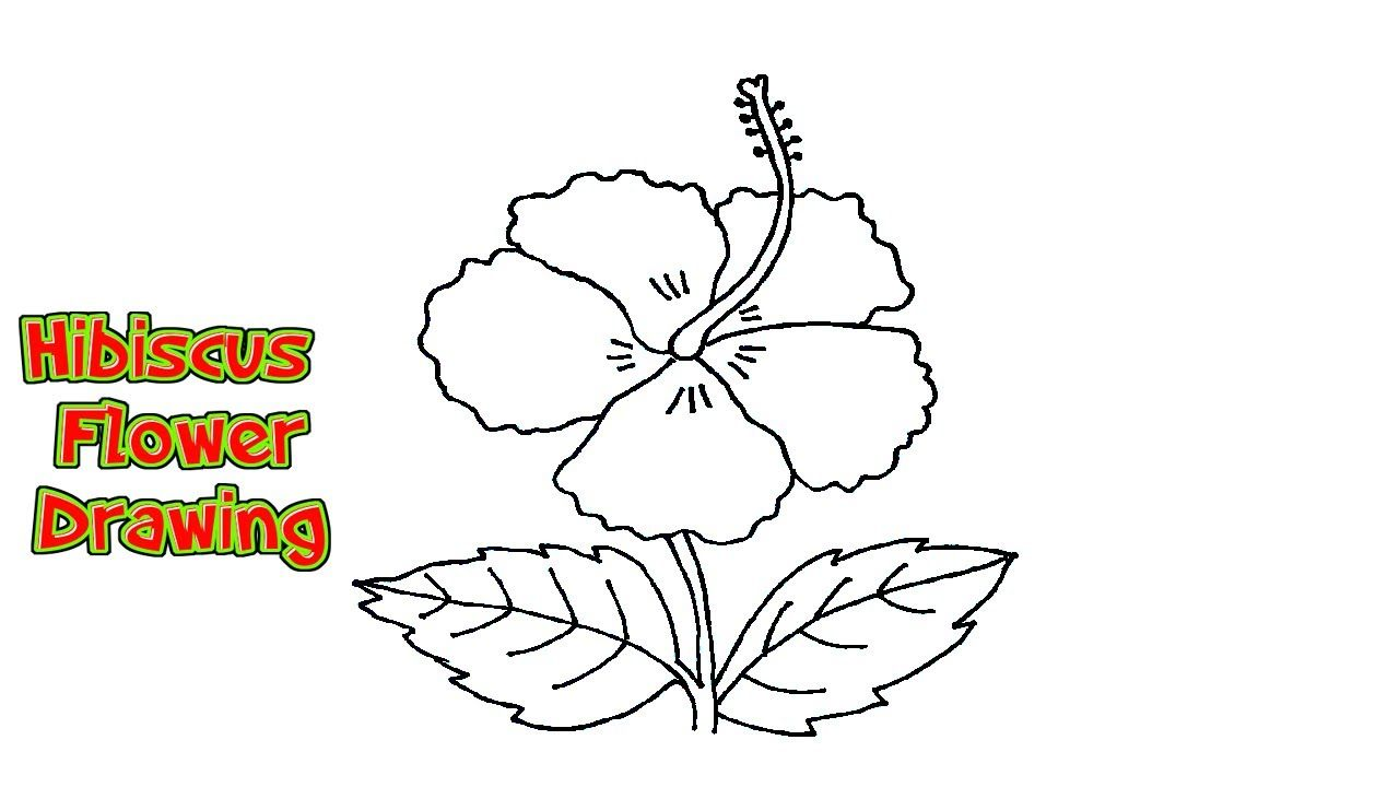 How To Draw A Hibiscus Flower Step By Step In Easy Method In 2020