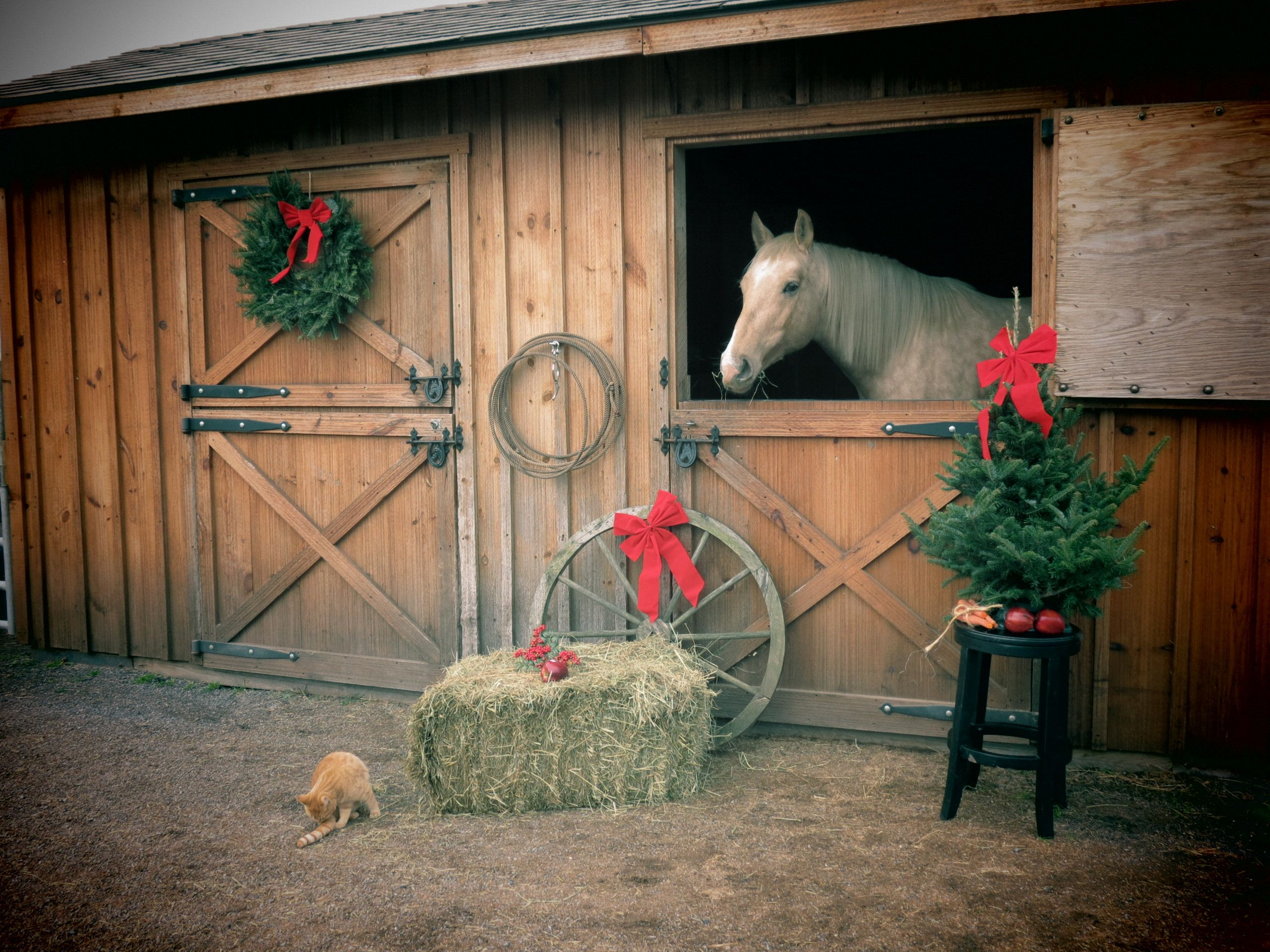 Google Image Result For Images5fanpop Photos 28300000 Country Christmas Horses 28304089 2560 1920