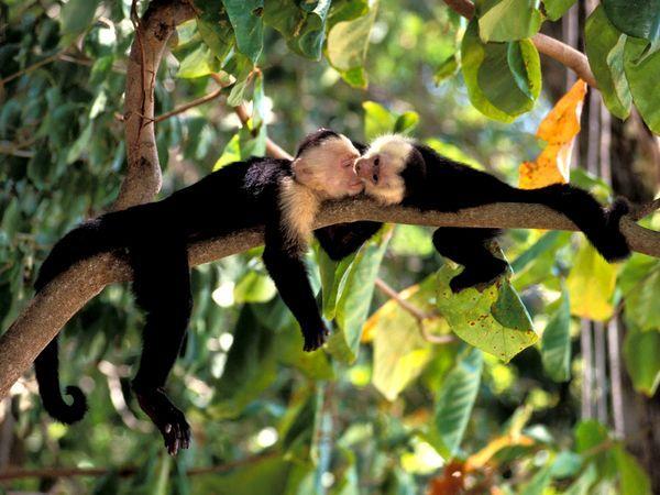 Explore Our Rainforests Rainforest Animals Animals Kissing