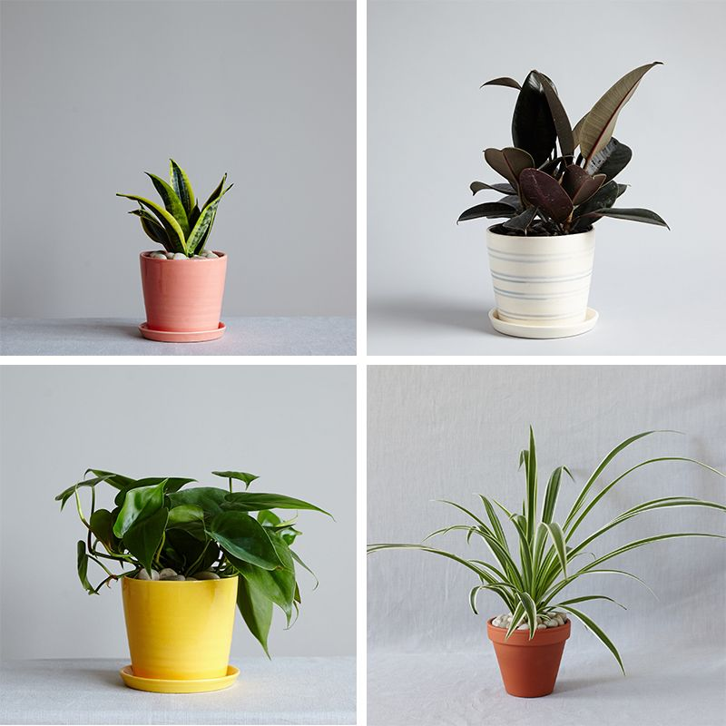 Discover the most beneficial plants for your home handpicked by the experts. & The Best Plants for Bedrooms and Bathrooms With The Sill | Plants ...
