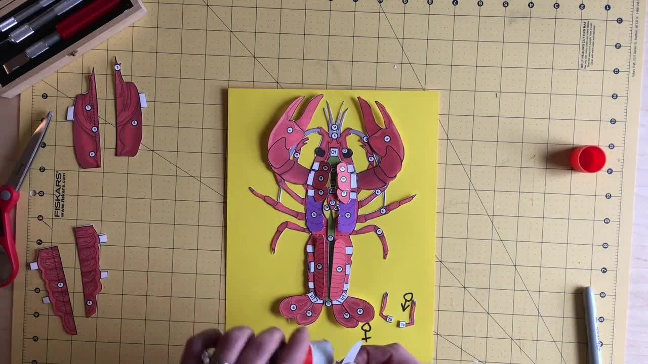 Interactive 3 D Crayfish Dissection Model Video In 2020 Life Science Lessons Life Science Activities Biology Lessons