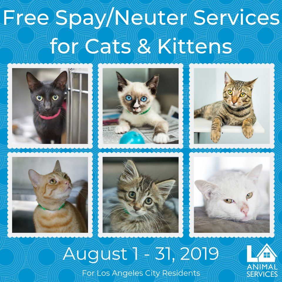 California Los Angeles Free Cat Spay Neuter Certificates La Animal Services Cats And Kittens Kittens Cats
