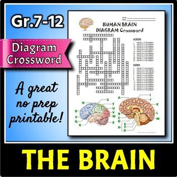 Brain Crossword This Brain Diagram Crossword Is A Great Way To Help Review And Reinforce The Terminology Associated Brain Diagram Body Systems Unit Brain Stem