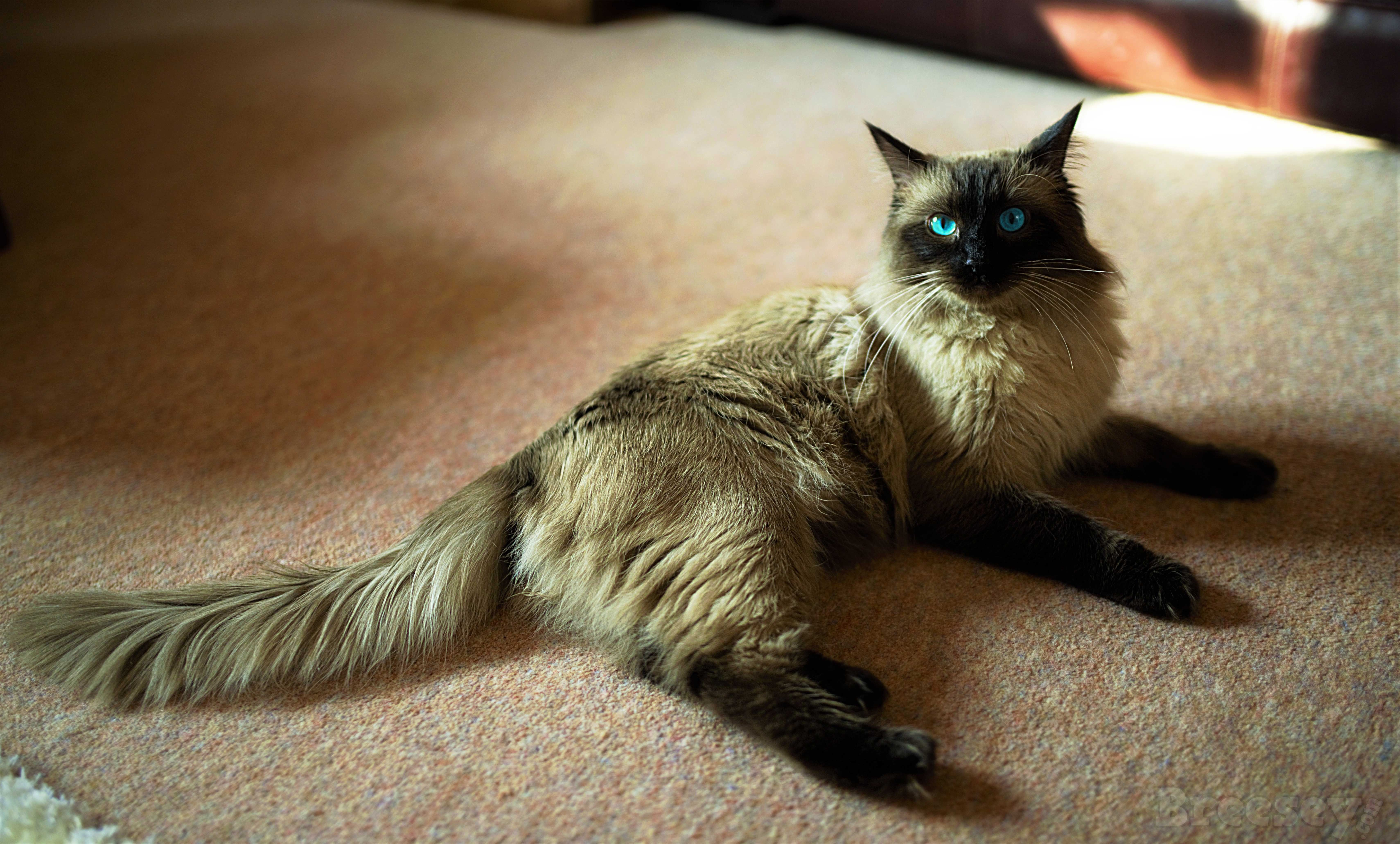 Pin by on My Pics of Jinxy Cats, Animals
