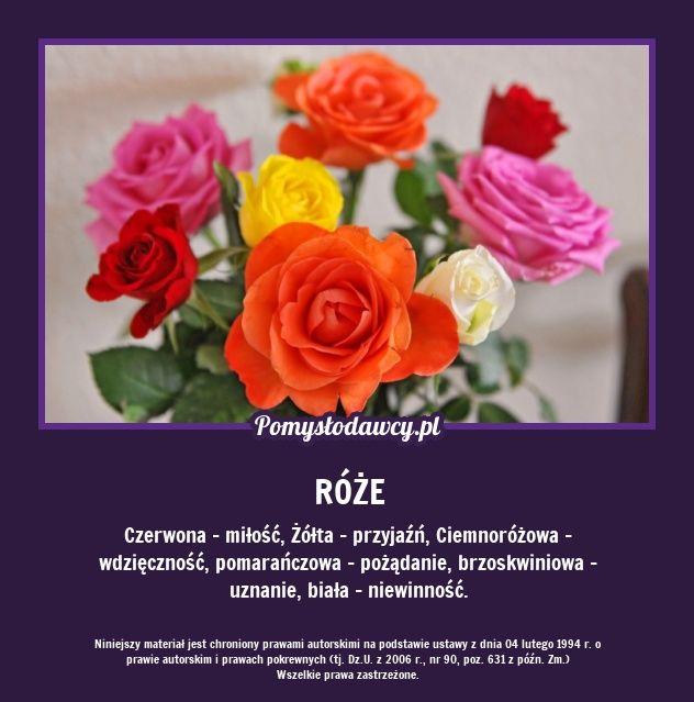 Pomyslodawcy Pl Serwis Bardziej Kreatywny Rose Plants Flowers