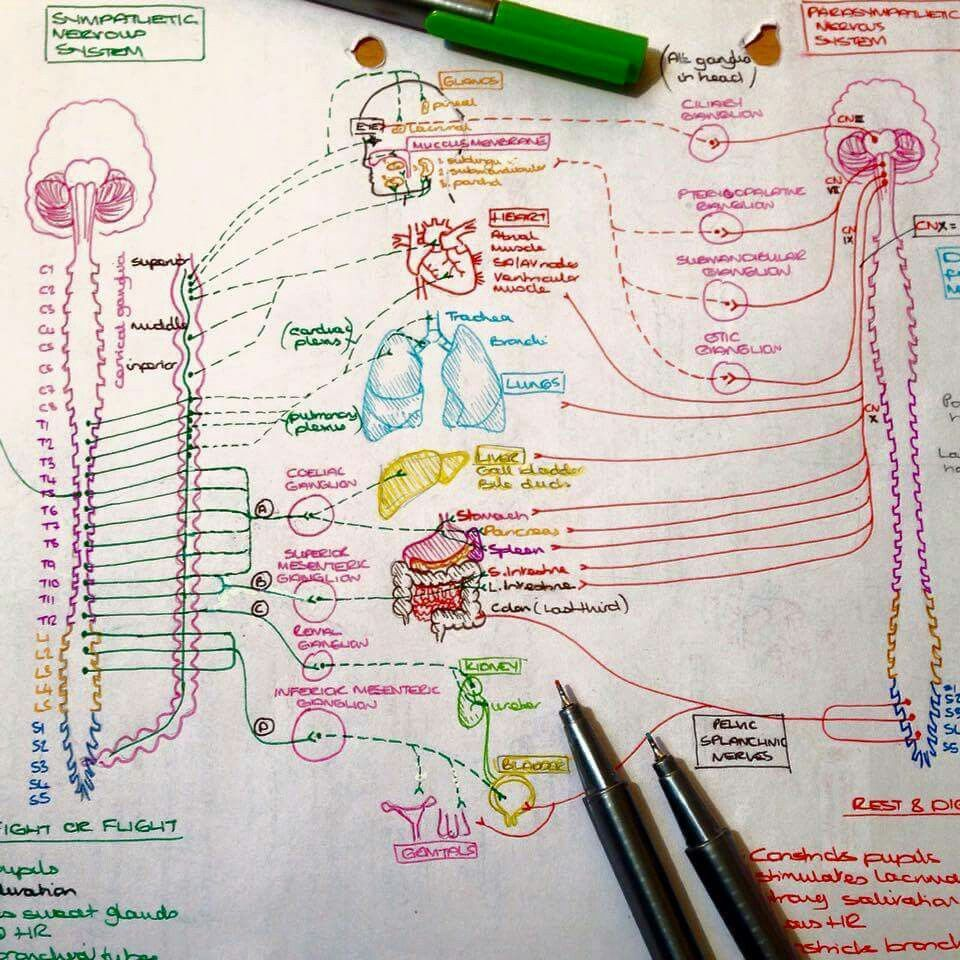 Pin de Marelize Le Roux en health ♡ | Pinterest | Apuntes, Medicina ...