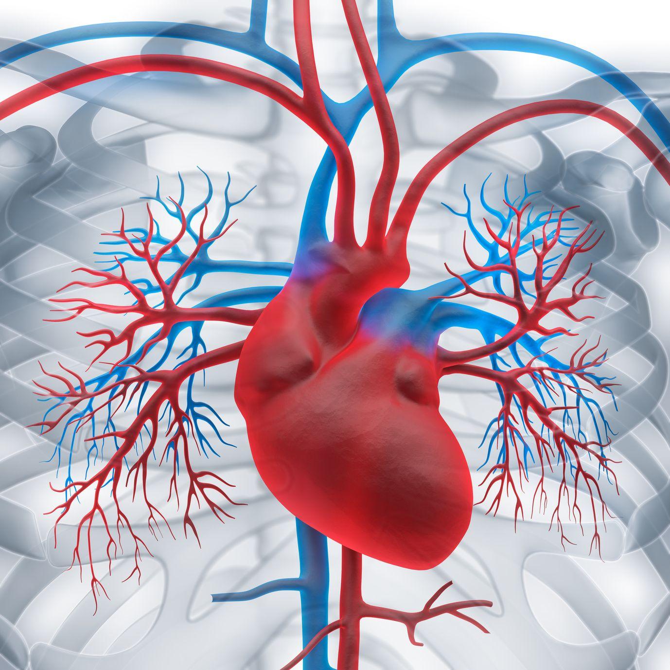 Cardiovascular System Nursing Assessment: Focused interview ...