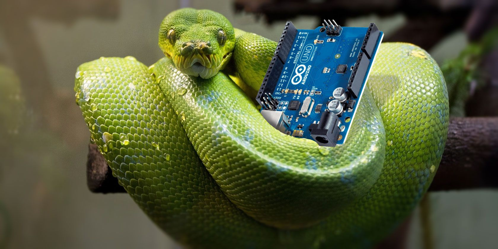 Image result for Python snake and program