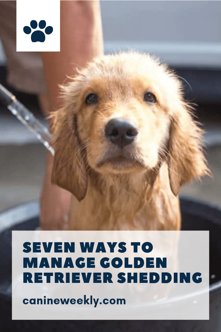 Have You Figured Out Ways To Control Your Golden Retriever S Shedding Problem Don T Worry C Golden Retriever Golden Retriever Facts Golden Retriever Grooming