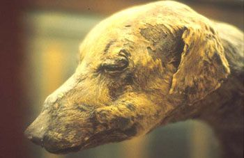 Mummy Of A Dog Man S Best Friend Was Considered Not Just
