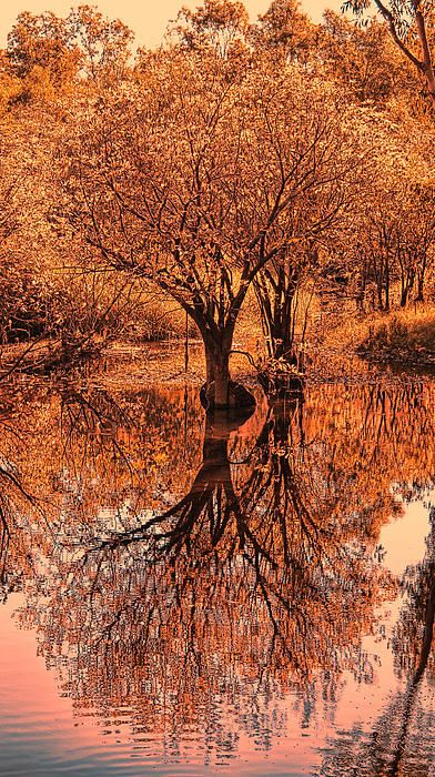 Autumn Reflections by Douglas Barnard -