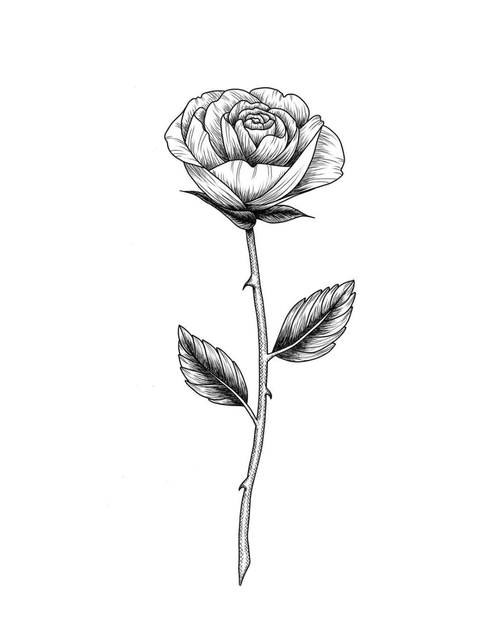 A simple rose sketch with a thorn, how to draw within 15-minutes.   Rose sketch, Rose drawing ...