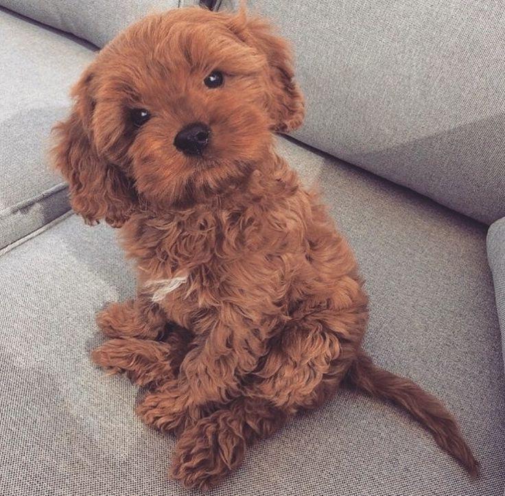 Photo of Imagen sobre lindo en cachorros 🐶 por Farah✨ en We Heart It #on #image #Fara …