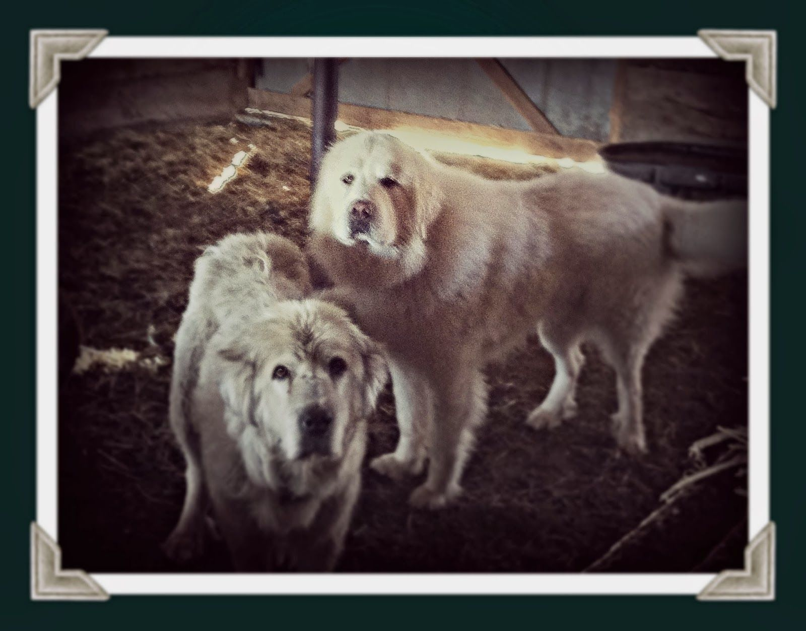 Home farming scents how to make healthy dog food