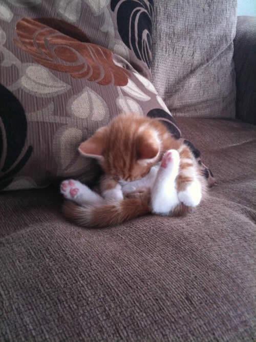 Gatitos lindos dormidos en posiciones curiosas (12 fotos) http://j.gs/4zp5