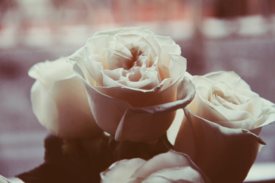white roses <3