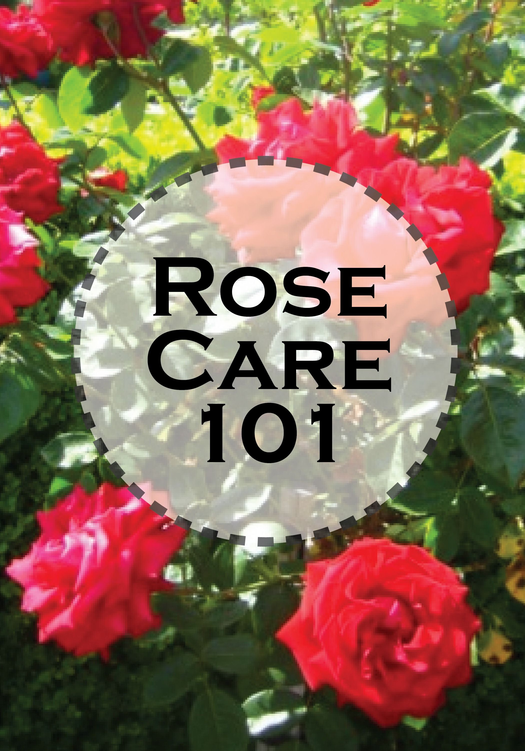 Basic Rose Care For Beginners is part of Rose care, Rose garden design, Rose bush care, Planting roses, Roses garden care, Growing roses - One of the first flowers I fell in love with were roses  They come in so many colors from bright white to soft pink to fiery red  Roses have one of the most beautiful scents in the flower world  They also come as single open petals or ones that have over a hundred petals that   Read More »