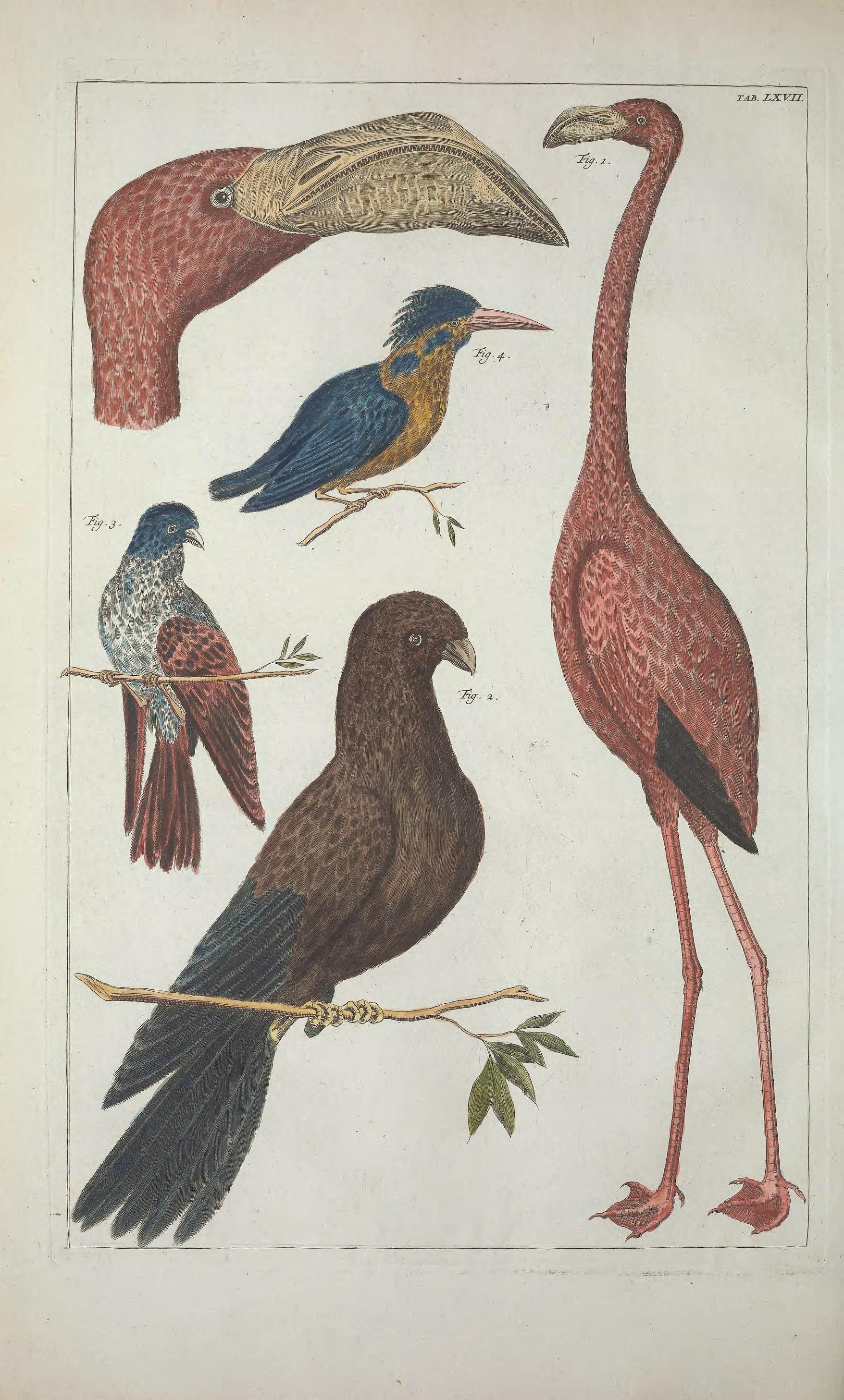 Albertus Seba - Cabinet of Natural Curiosities   Seba\'s Cabinet of ...