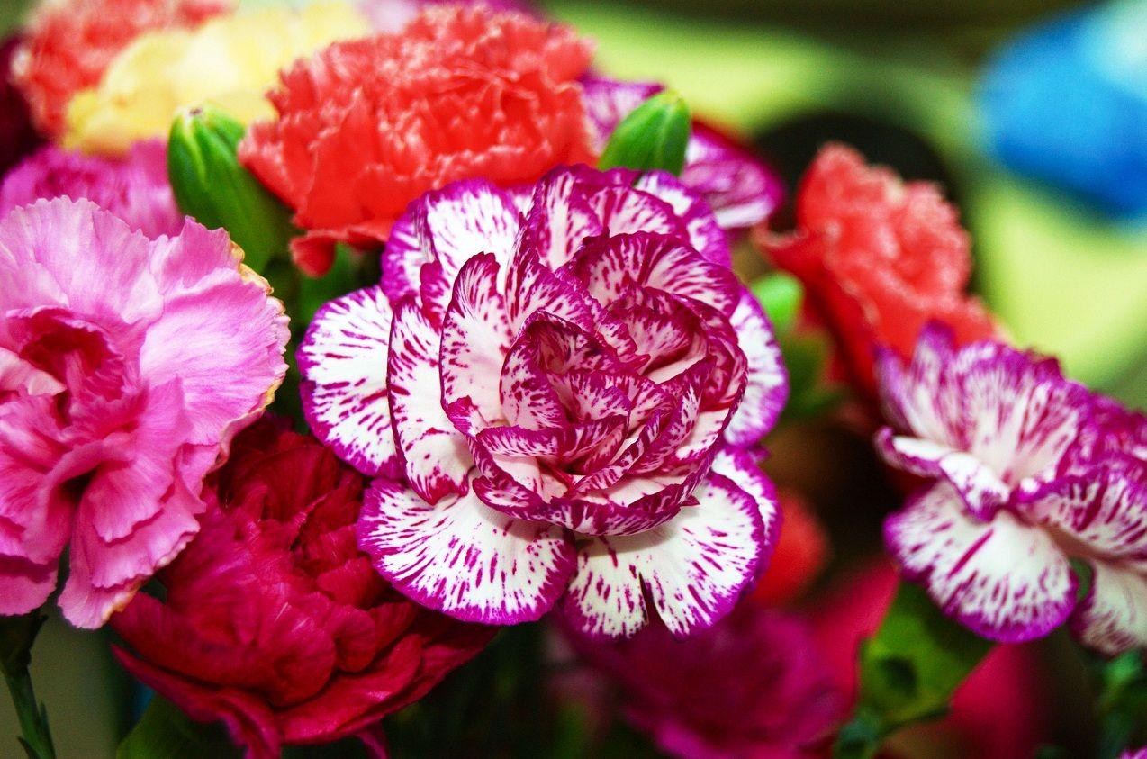 Названия неприхотливых садовых многолетних цветов: создаём ...