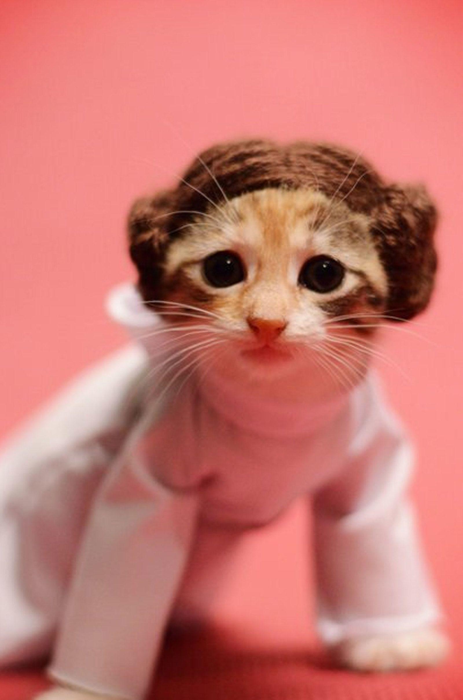26 Photos Of Cute Kitties In Costumes Cute Cats Pet Costumes Cat Halloween Costume