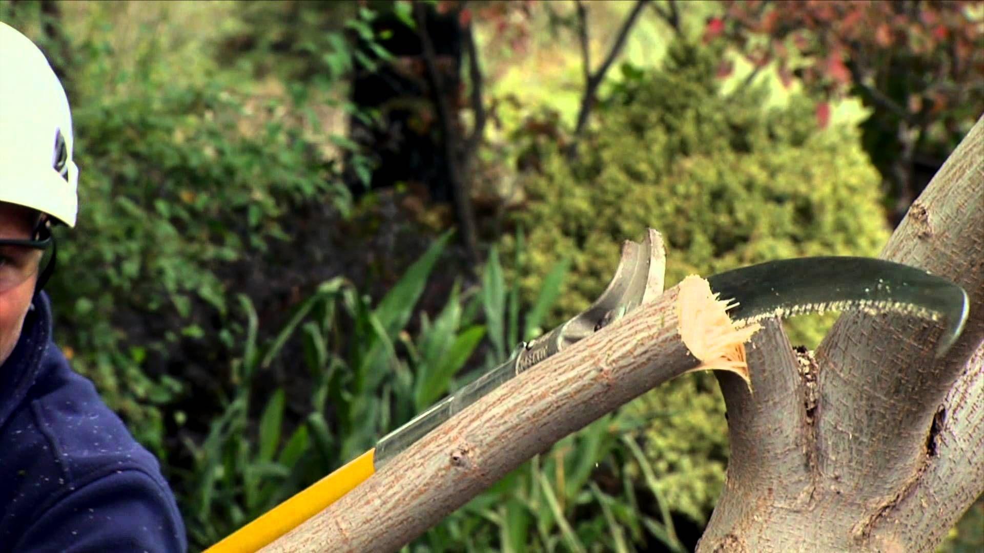 In this segment certified Arborist Brian Eshleman of ...