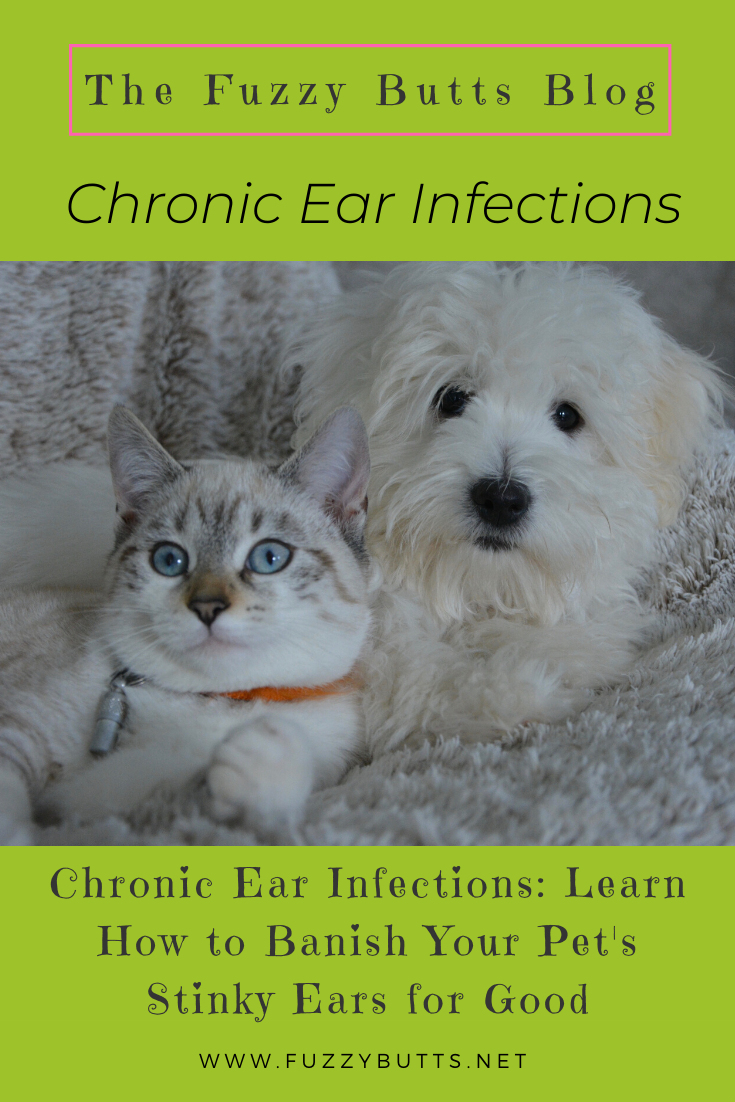Chronic Ear Infections in Dogs and Cats How to Banish