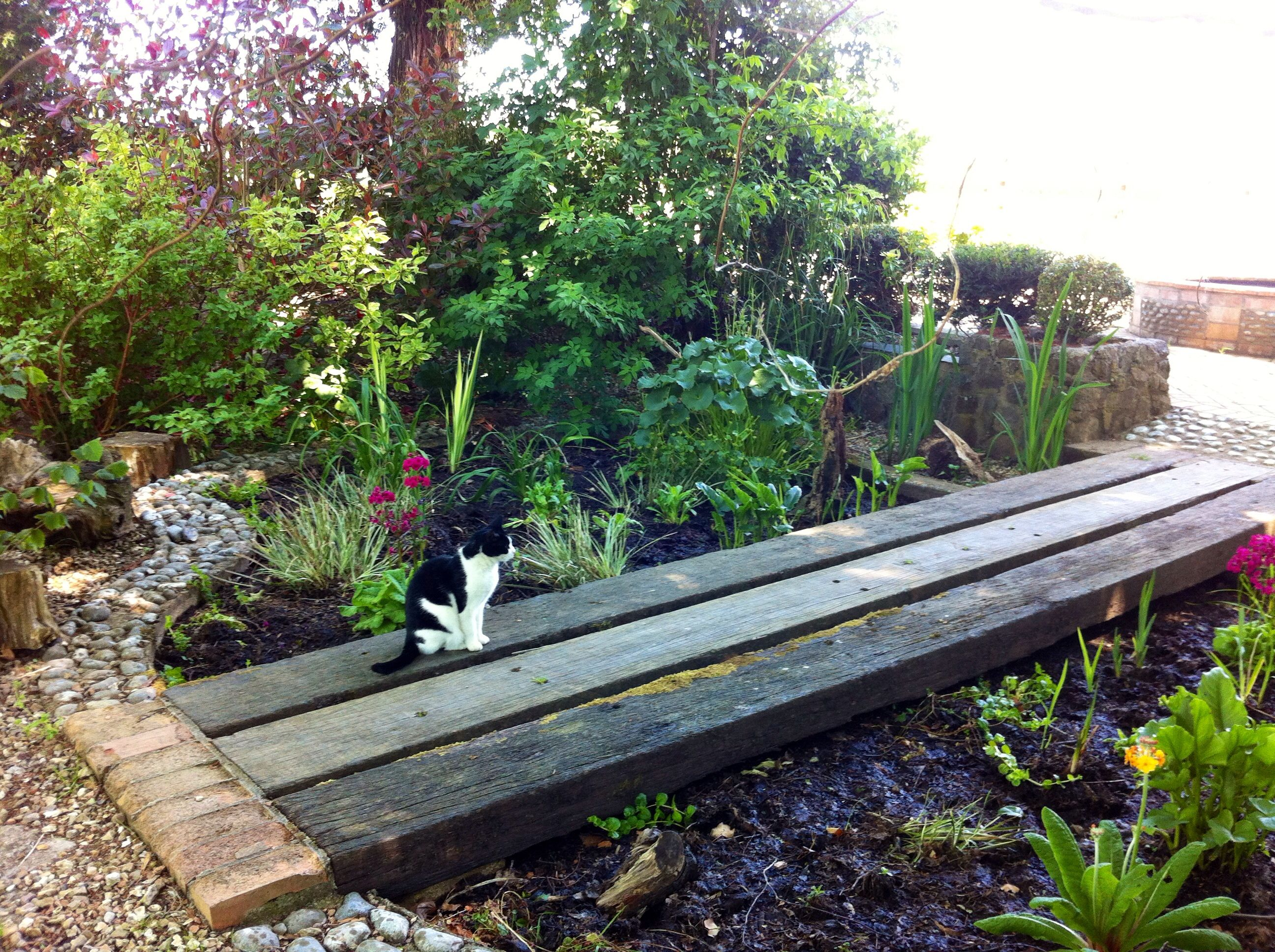 Monkey Sitting On The Sleepers Over The Bog Garden Bog Garden