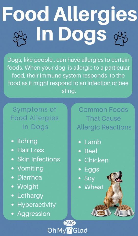 Dog Food Allergy T