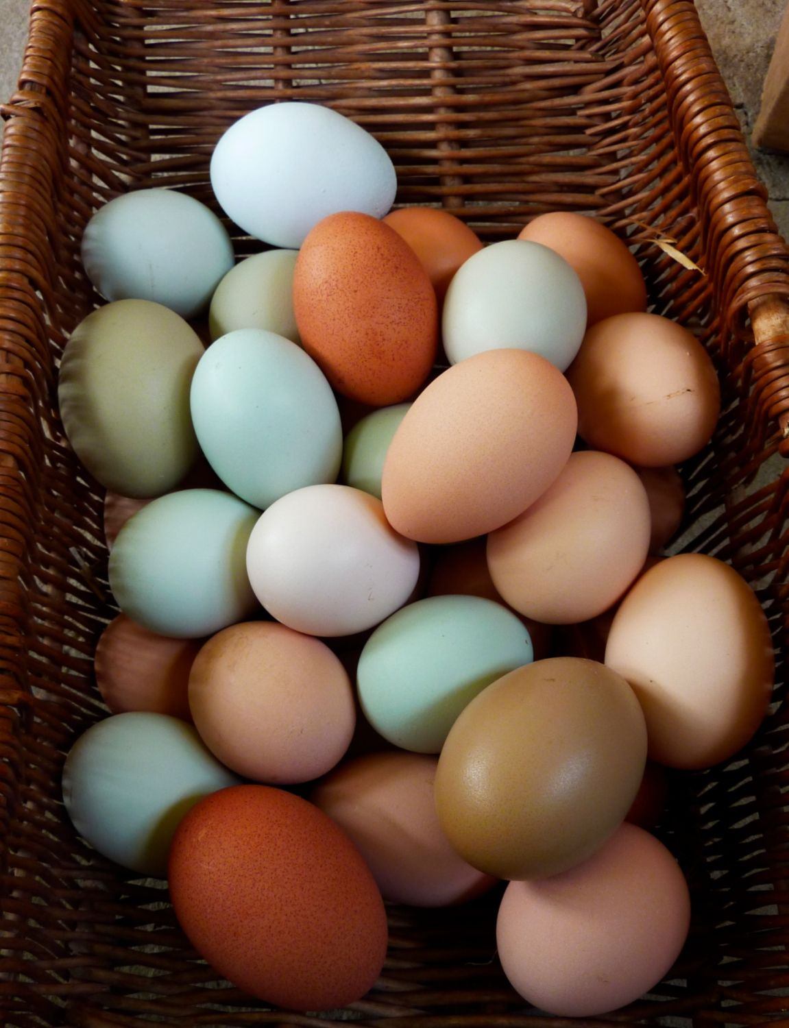 Chicken breeds for eggs - Chicken Breeds Egg Layers Easter Egg Layer Chickens