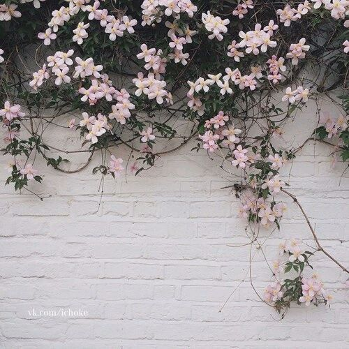 Flowers Pink And Wall Image Gray Aesthetic Wallpaper Plants
