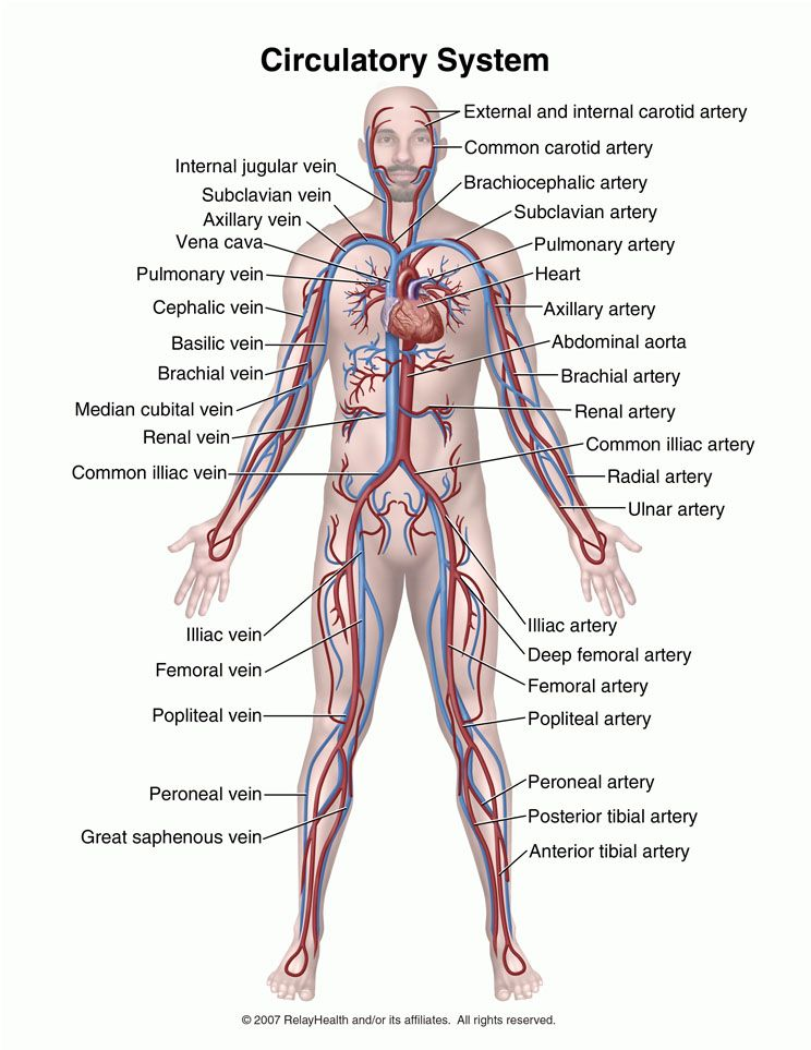 Know All These Parts Of The Circulatory System Nursing Pinterest