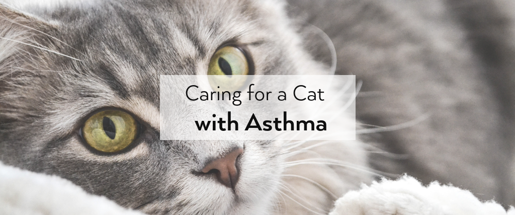 Caring for a Cat with Asthma Cat asthma, Cats, Asthma
