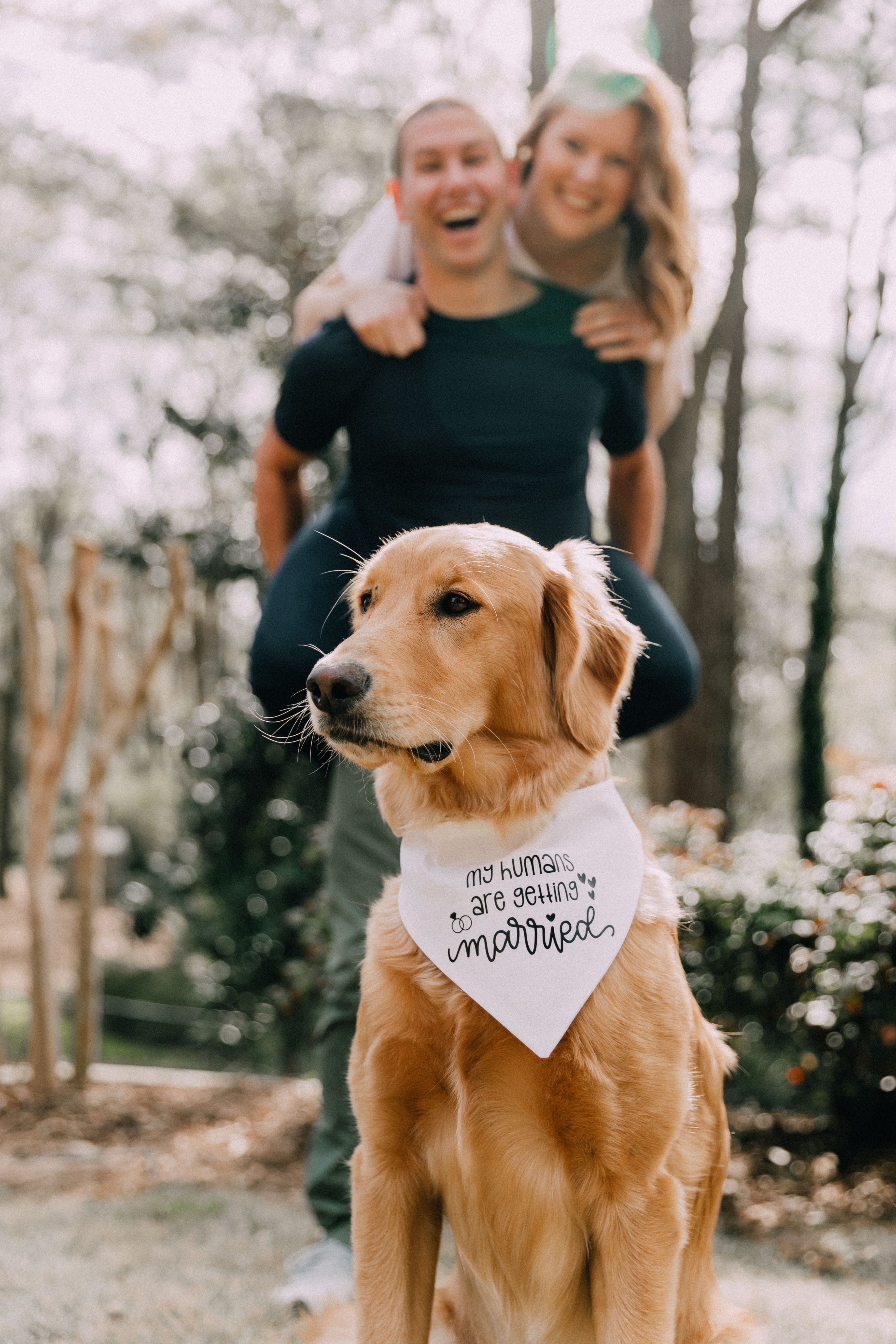 My Humans Are Getting Married Dog Bandana Dog Engagement Photos