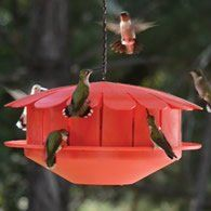 Humm-Bug Hummingbird Feeder Hummingbird Feeder #dinosaurpics