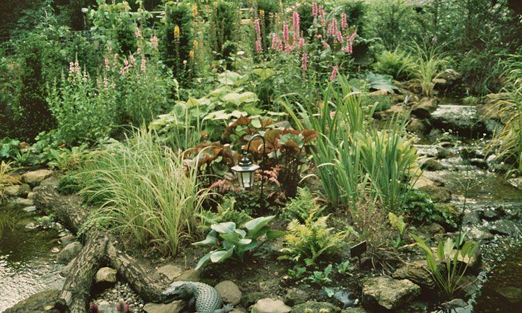 how to build a 39 bog garden 39 around your pond gardens