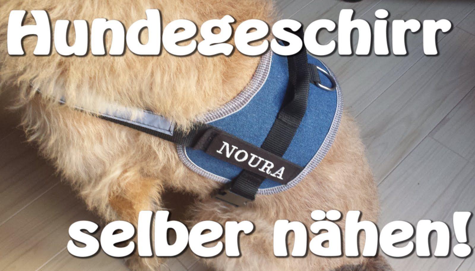 DIY | Hundegeschirr selber nähen | Nähen für Anfänger | Tutorial ...