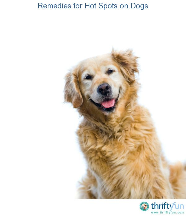 Remedies For Hot Spots On Dogs Goldens Dogs Female Golden