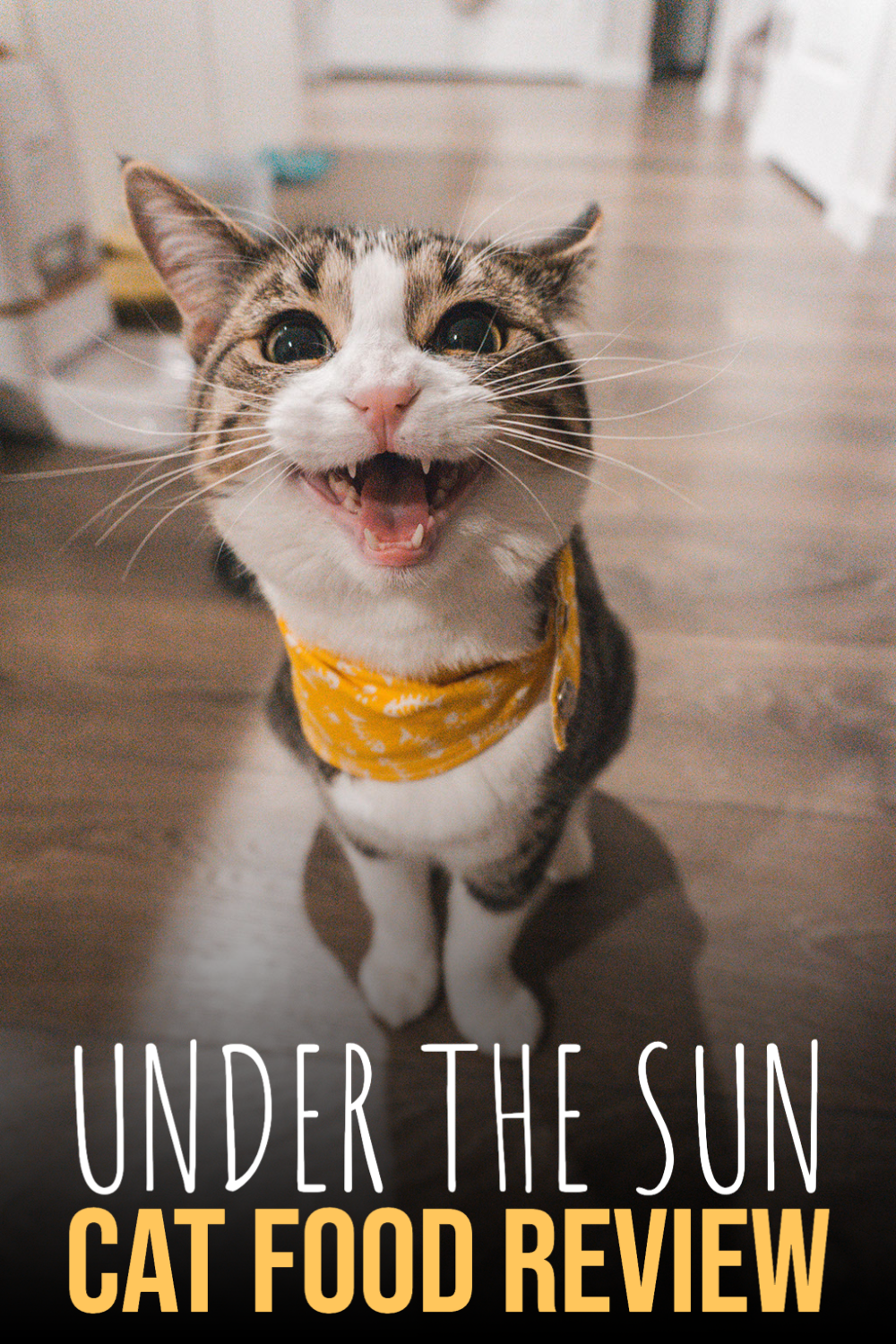 Under The Sun Cat Food Review In 2020 Best Cat Food Cat Food Cat Food Reviews