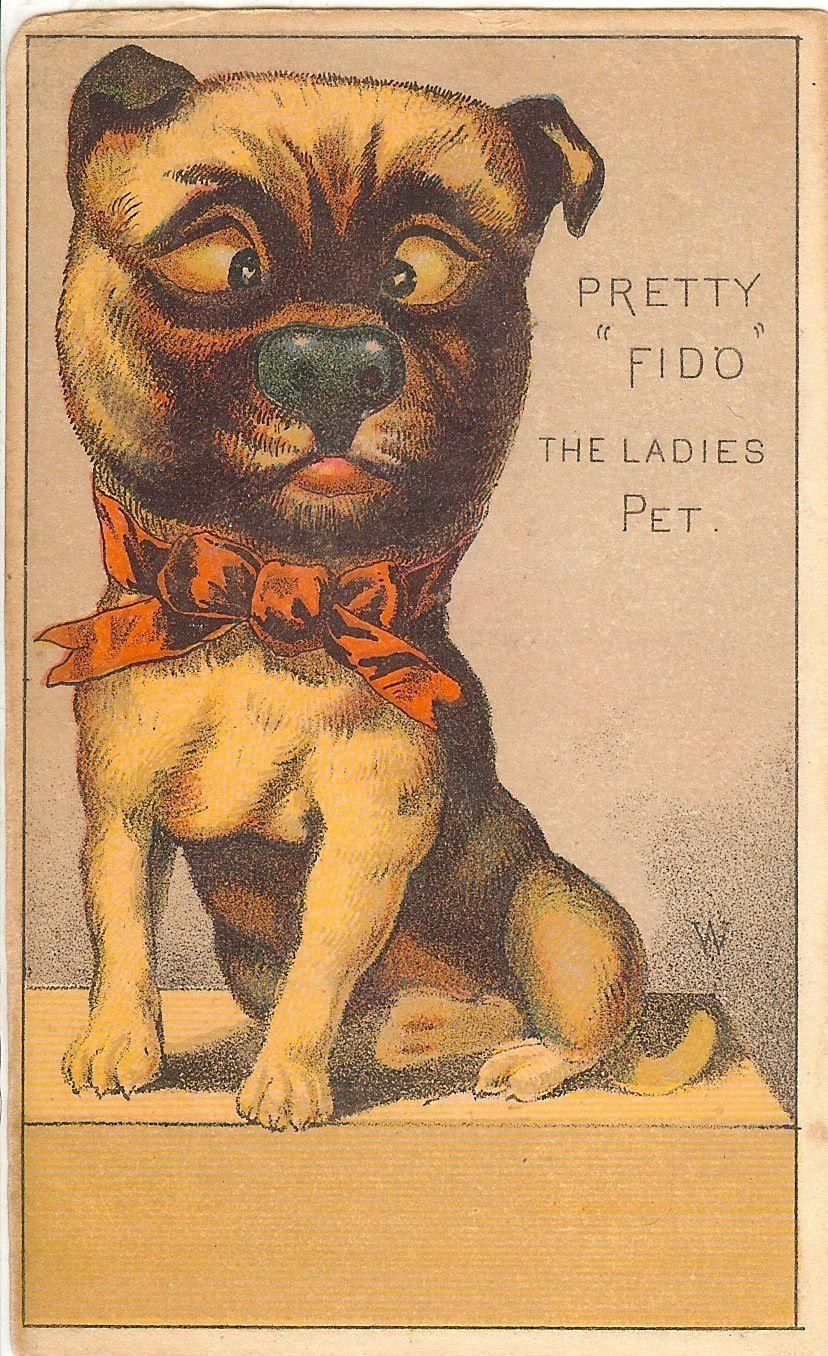 Pug Pretty Fido The Ladies Pet Postcard Pug Love Pugs