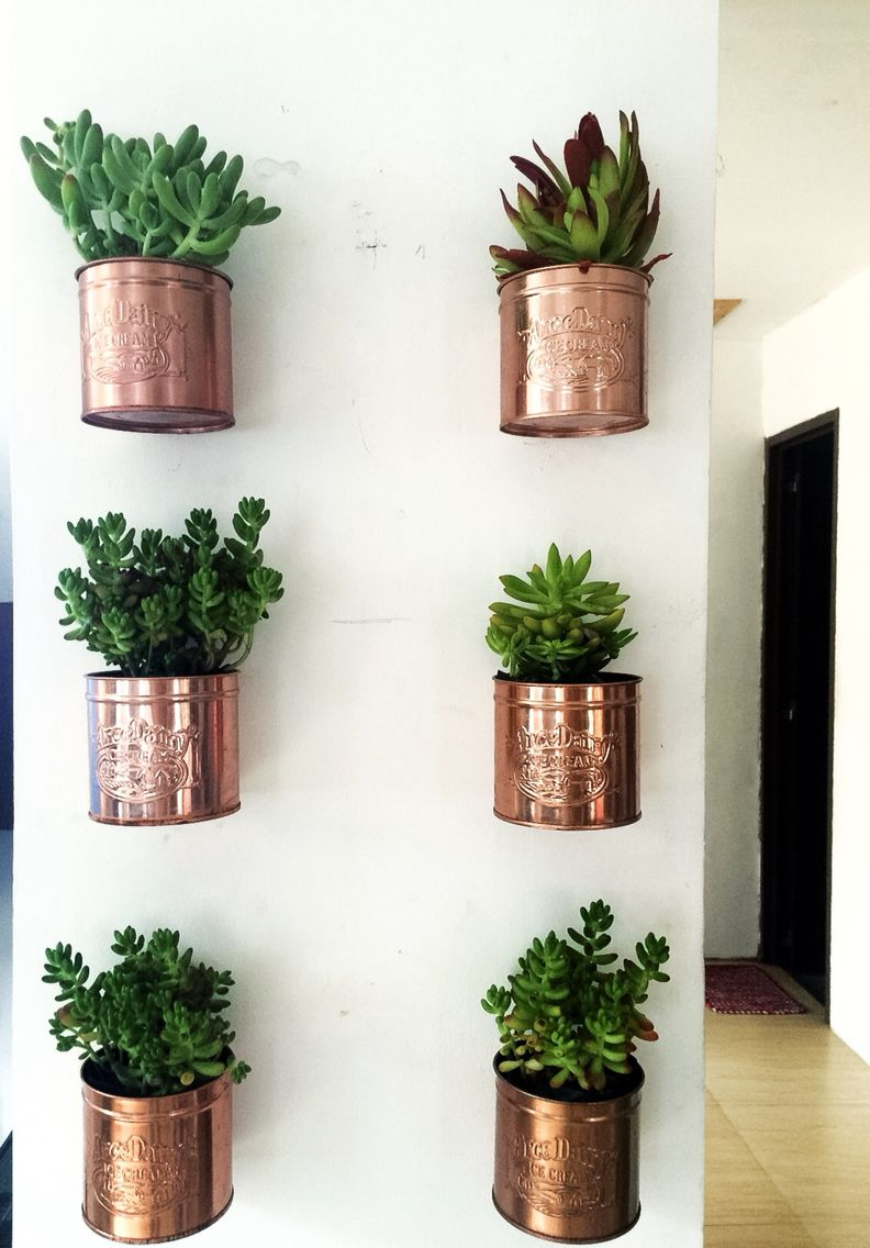 Diy Ice Cream Tin Can Wall Planters Plantas Interior Decoracion