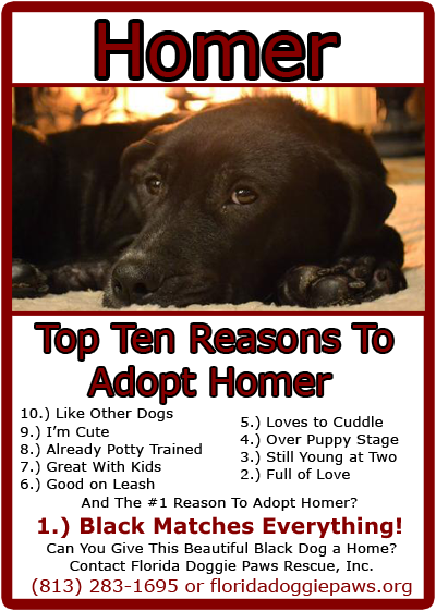 Homer Really Needs A Home In Central Florida Check Out The Top Tens Reason To Adopt This Handsome Guy Puppy Stages Dog Adoption Pup