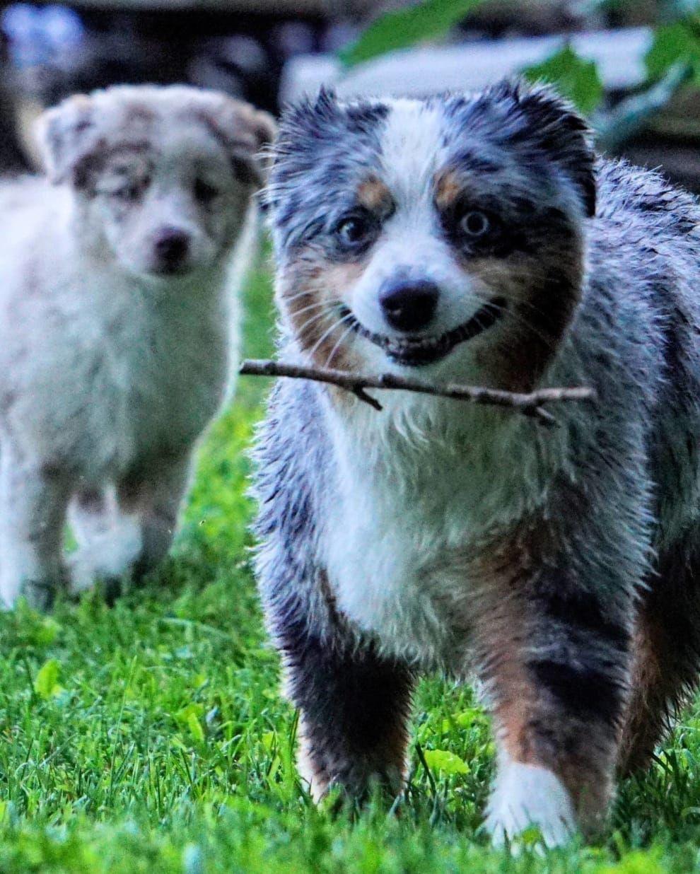 Bilder Witzig Tiere