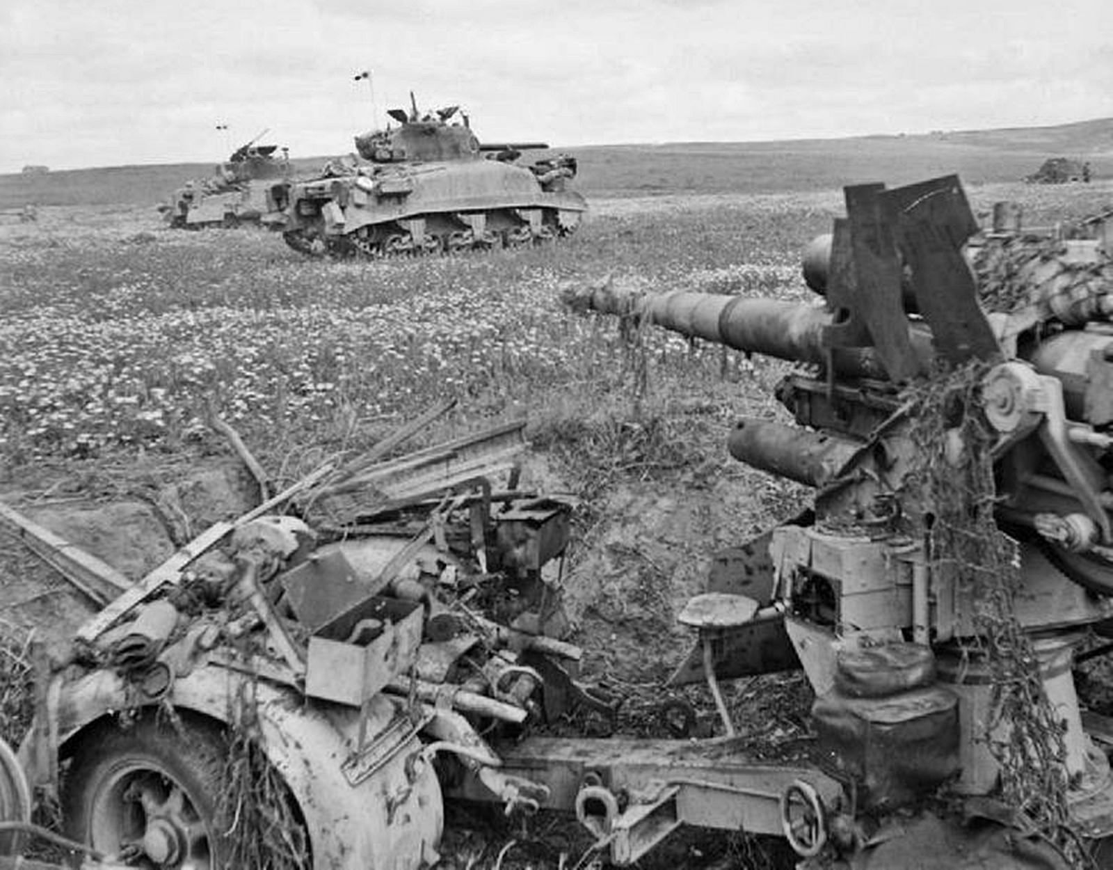sherman tanks advance past a knocked out 88mm anti tank gun tunisia