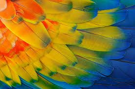 colors-of-nature - Google Search