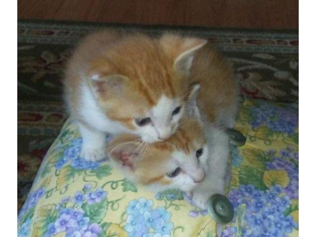 Free kittens Kittens near me, Kittens, Kittens cutest
