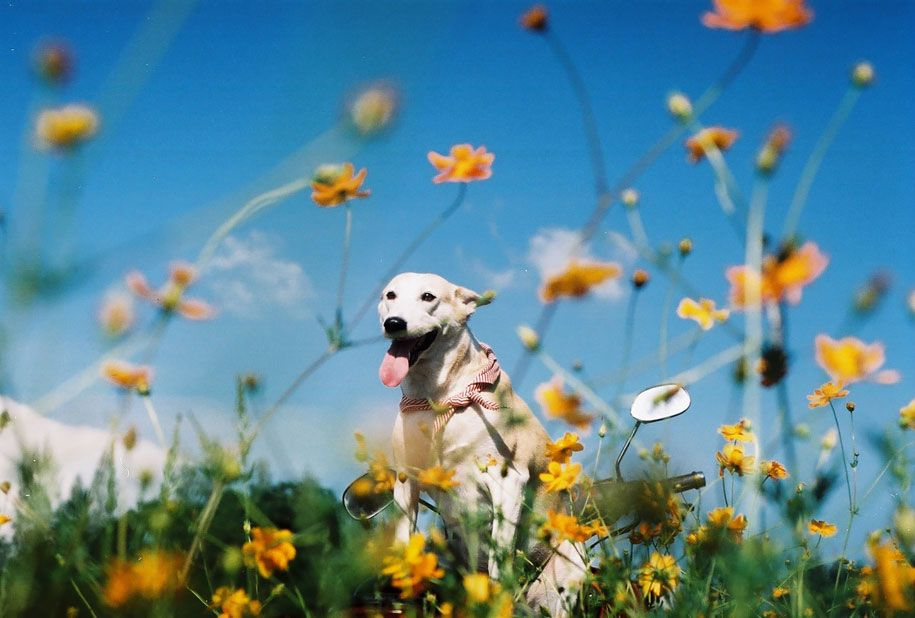 happy-dog-photography-gluta-thailand-6