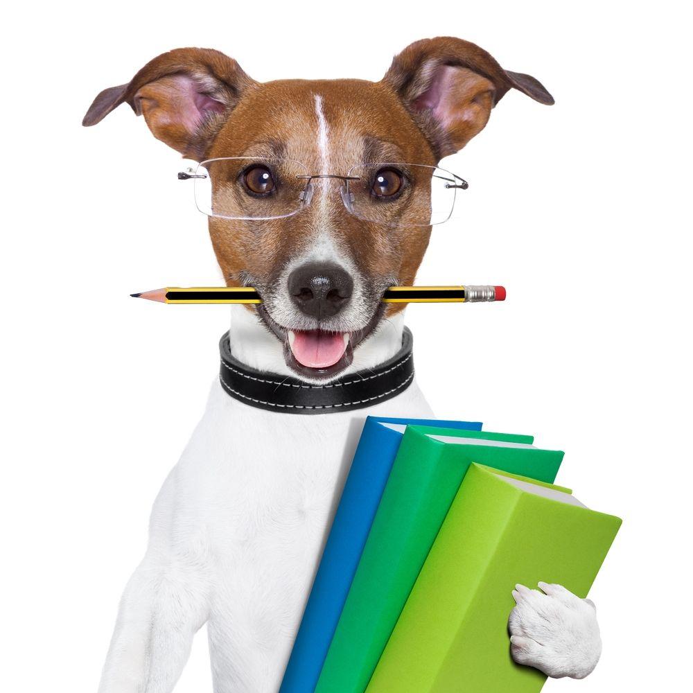 5 Tips For Training Dogs Successfully Dog Training Dog Training